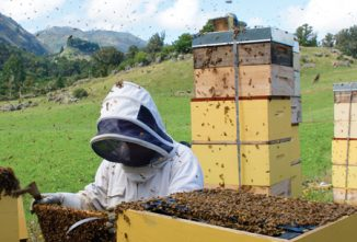 Raise Bees in Your Backyard