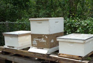 Who is the Queen Honey Bee and Who is in the Hive with Her?