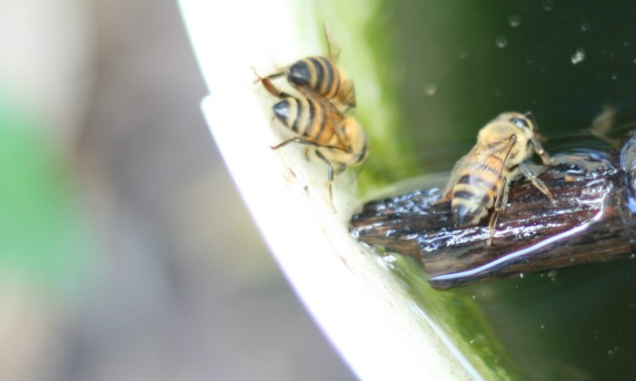 How to Make a Bee Watering Station