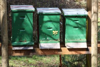 Sun and Shade for Bees: What is the Right Mix?