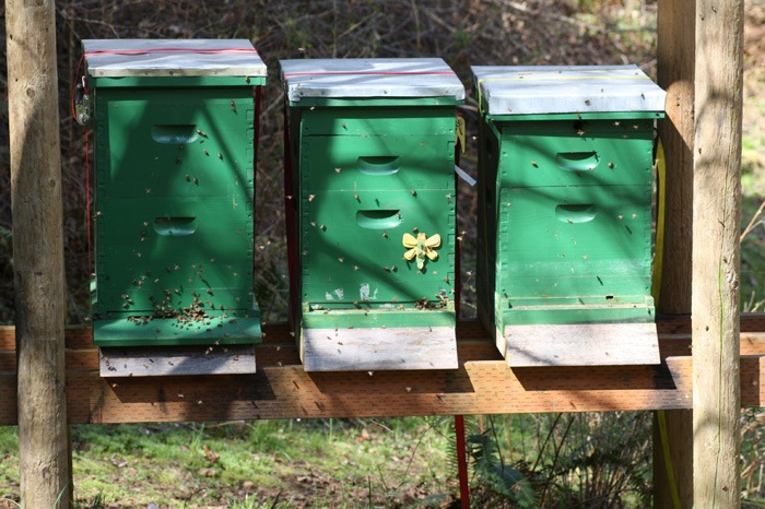 Sun And Shade For Bees What Is The Right Mix Backyard Beekeeping