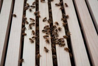 A Slatted Rack and Robbing Screen Can Improve Your Hive Entrance