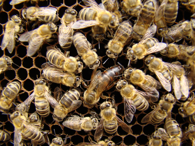 Fascinating Queen Bee Facts for Today's Beekeeper