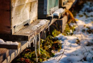 The Importance of Winterizing Beekeeping Equipment