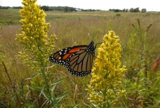 Why We Need to Protect Native Pollinator Habitat