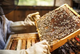 Top 10 Reasons for Starting Beekeeping