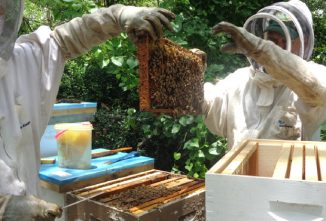 Questions to Ask When Starting a Bee Colony