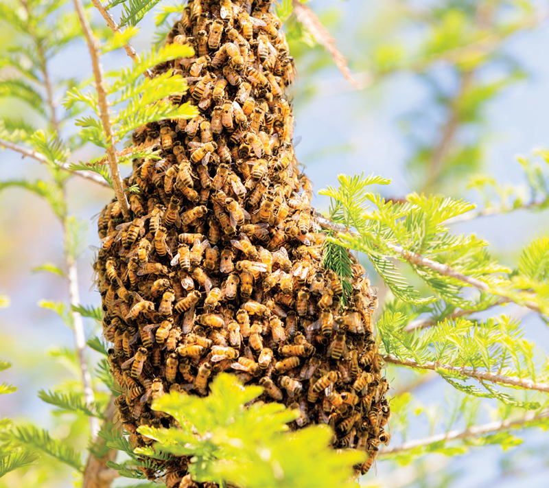 5 Tips for Starting Beekeeping