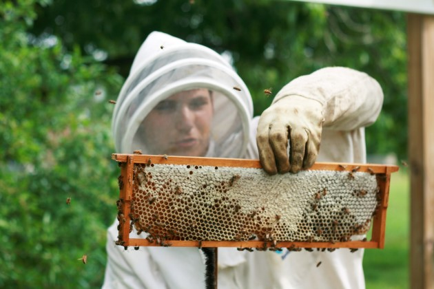 8 Ways to Be a Courteous Backyard Beekeeper