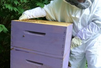 My Honey Bee Farming Project Year One