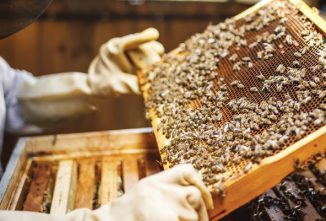 What's Better? Buying Bees or Catching Swarms?