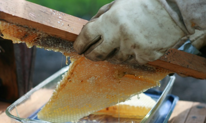 Make a DIY Honey Extractor