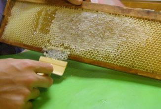 Propolis Benefits Inside and Outside the Hive