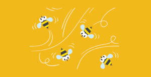 6 Honey Bees To Consider