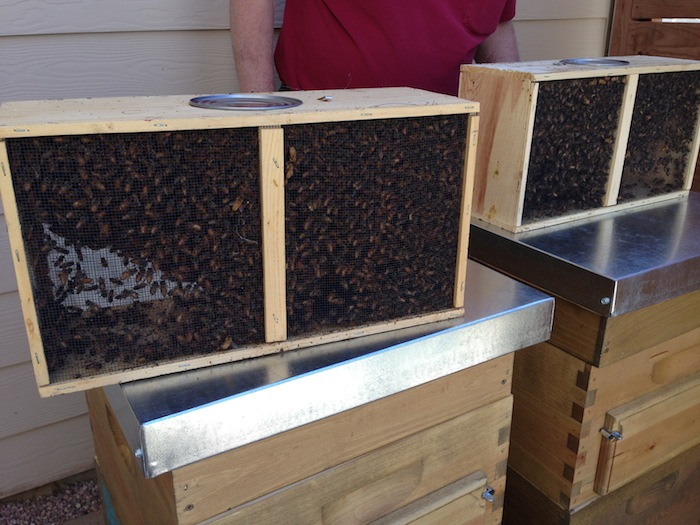 starting-beekeeping