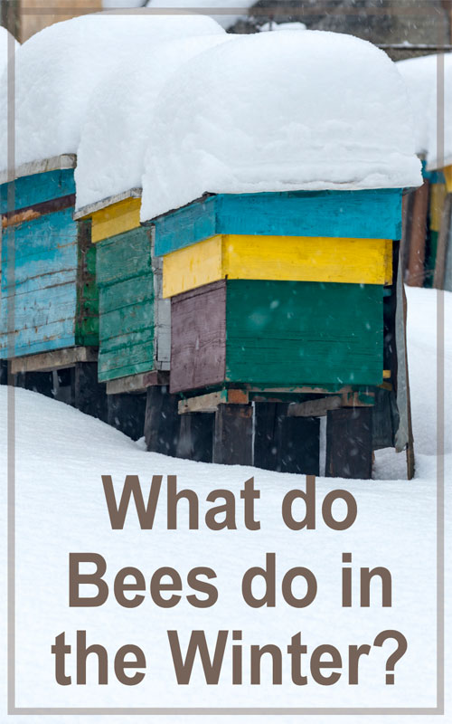 Bees in the Winter