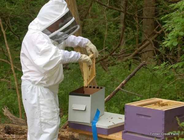 how-to-start-a-honey-bee-farm