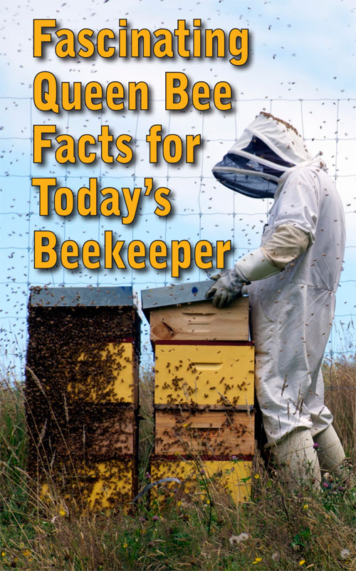 Queen Bee Facts
