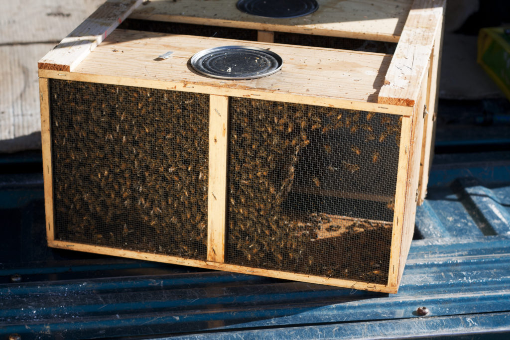cost-of-beekeeping