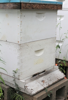 what-happens-to-bees-in-the-winter