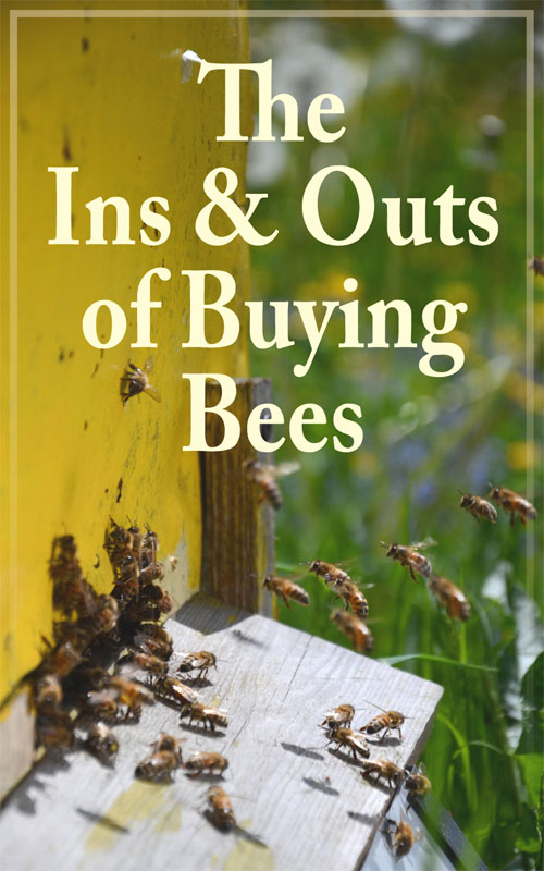 Buying Bees