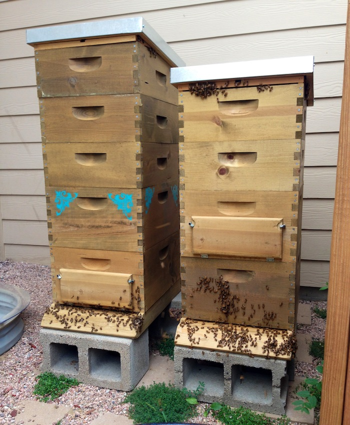 starting beekeeping