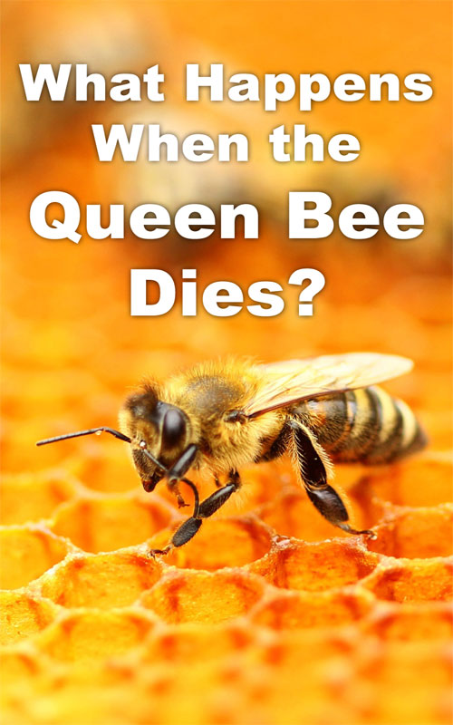 what happens when the queen dies - photo #14