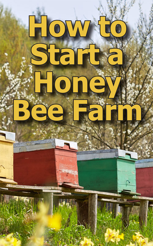 Start a Honey Bee Farm