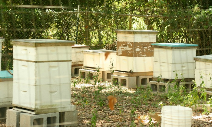 bee-watering-station