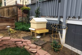 Navigating Urban Beekeeping Laws