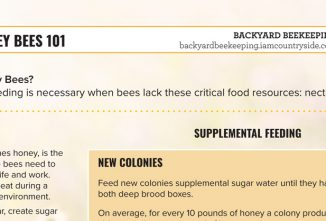 Feeding Honey Bees 101