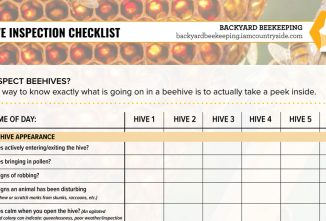 Beehive Inspection Checklist