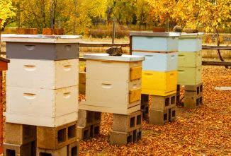 winter-bees-summer-bees