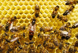 How Long After a Swarm Should I See Signs of a Queen?