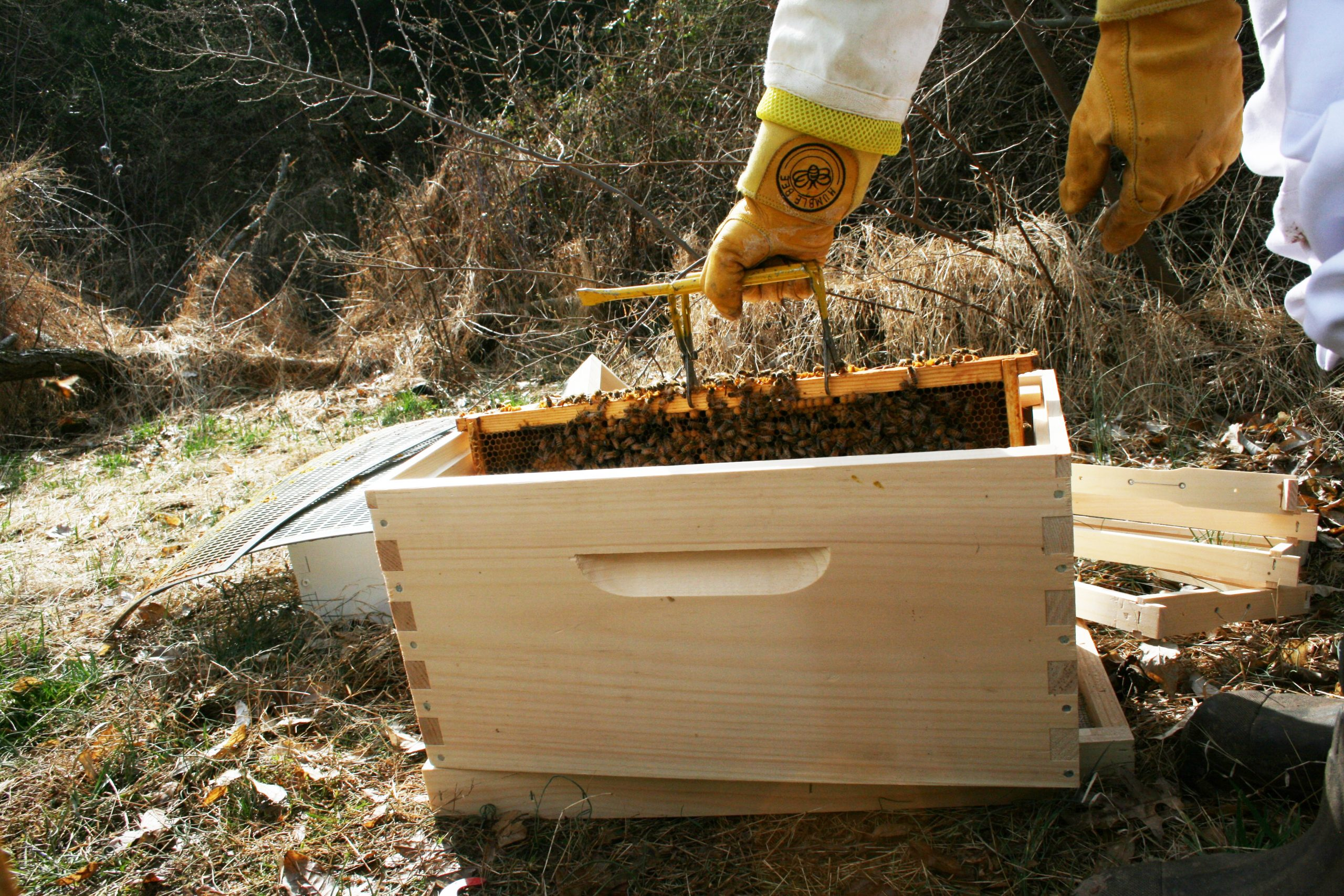 Growing Your Apiary: All About Splitting a Hive
