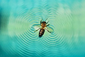 how-to-keep-bees-out-of-swimming-pools