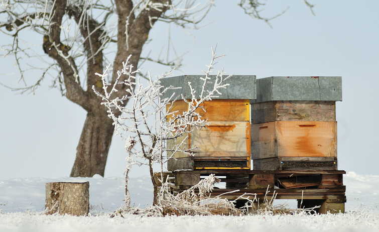 How Do I Keep the Hive Ventilated in Winter?